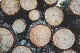 Ein besonderes Jubiläum: Die Holzhochzeit