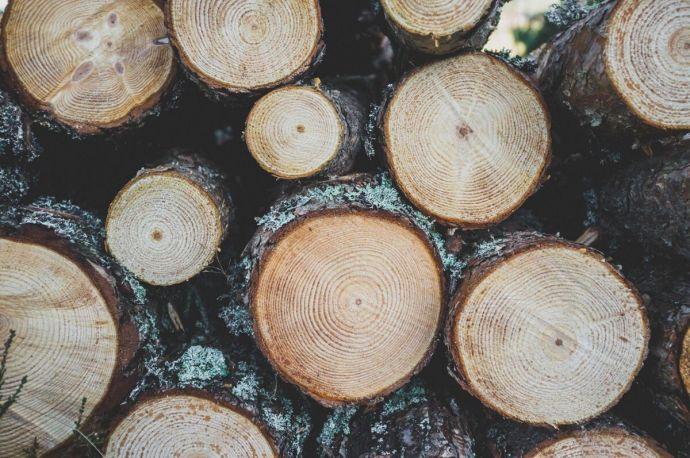 Holzhochzeit 1