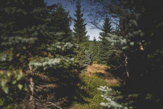 BeWooden - Ökologische Mode - Nachhaltig produziert
