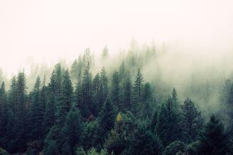 BeWooden - Pflanze jetzt deinen eigenen Baum