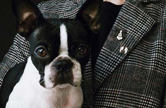 Hundeliebhaber aufgepasst