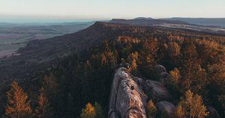 Warum Wälder ein wahrer Schatz sind