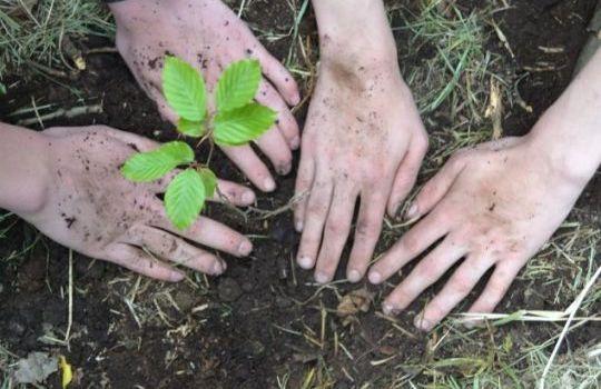 Pflanze jetzt Bäume mit uns!