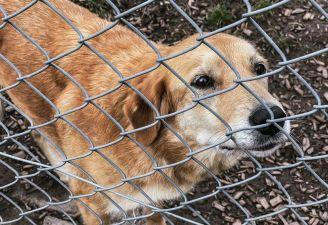 Wir unterstützen lokales Tierheim mit Spende