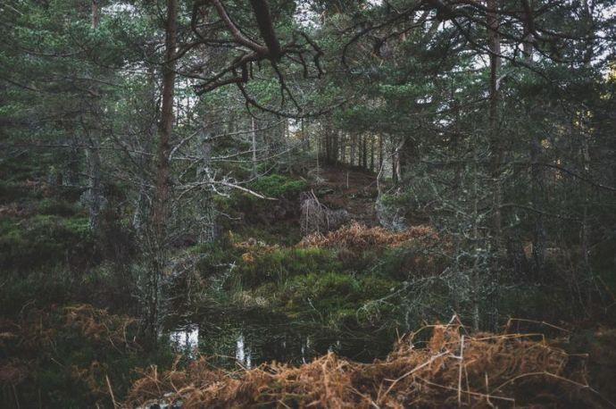 Dichter und dunkler Wald mit kleinem Wasserteich