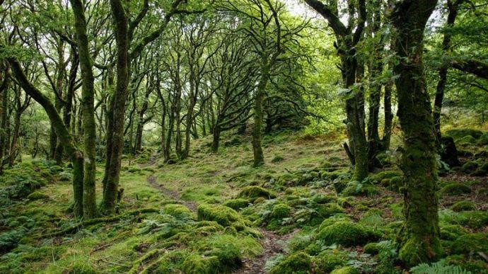 Dichter und stark bemooster Wald