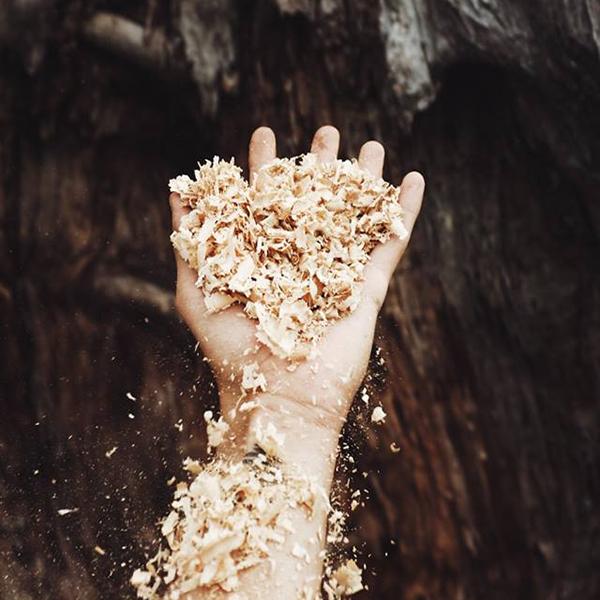 Hand mit Sägespäne vor Baumstamm